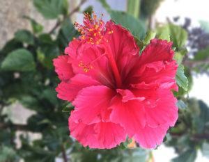 Sanar mi femenina con la belleza de las flores